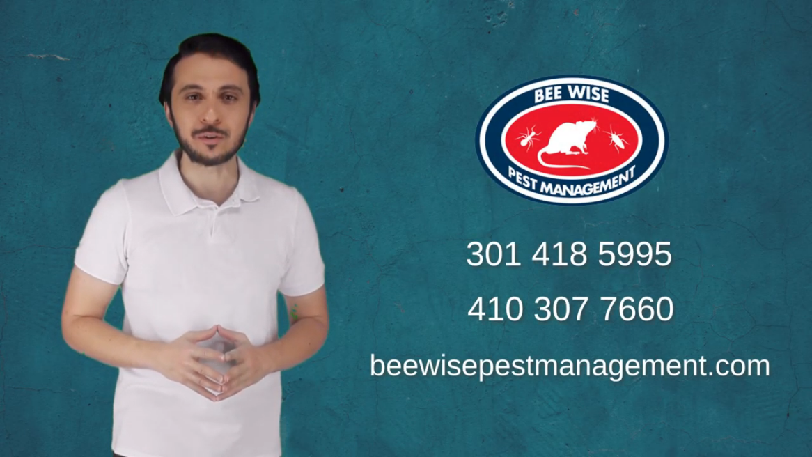 Bee Wise Pest Management